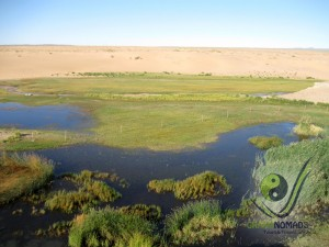 Gobi Oasis