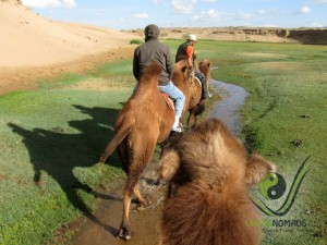 Riding on camels in the Gobi
