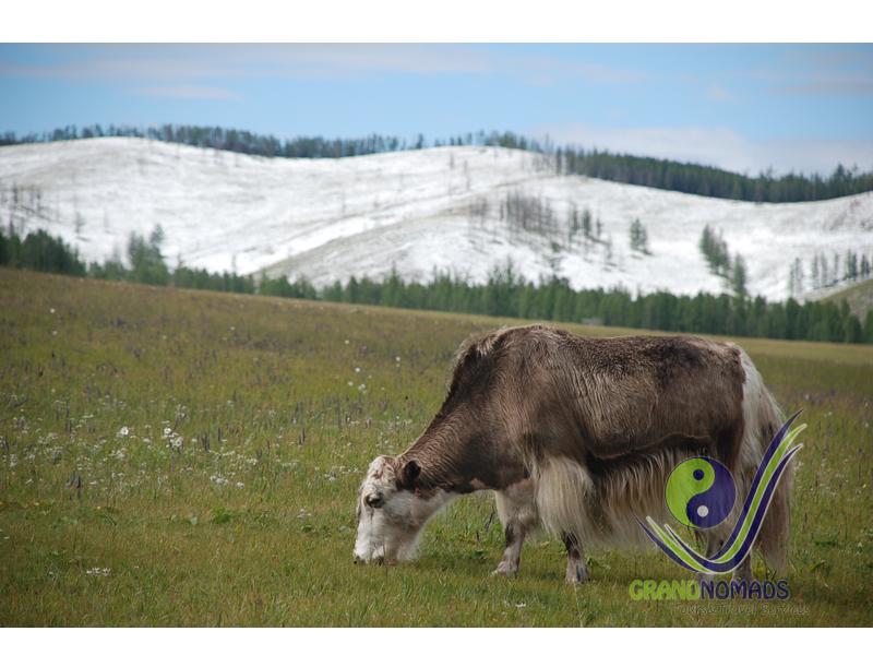 Khangai Mountain Range