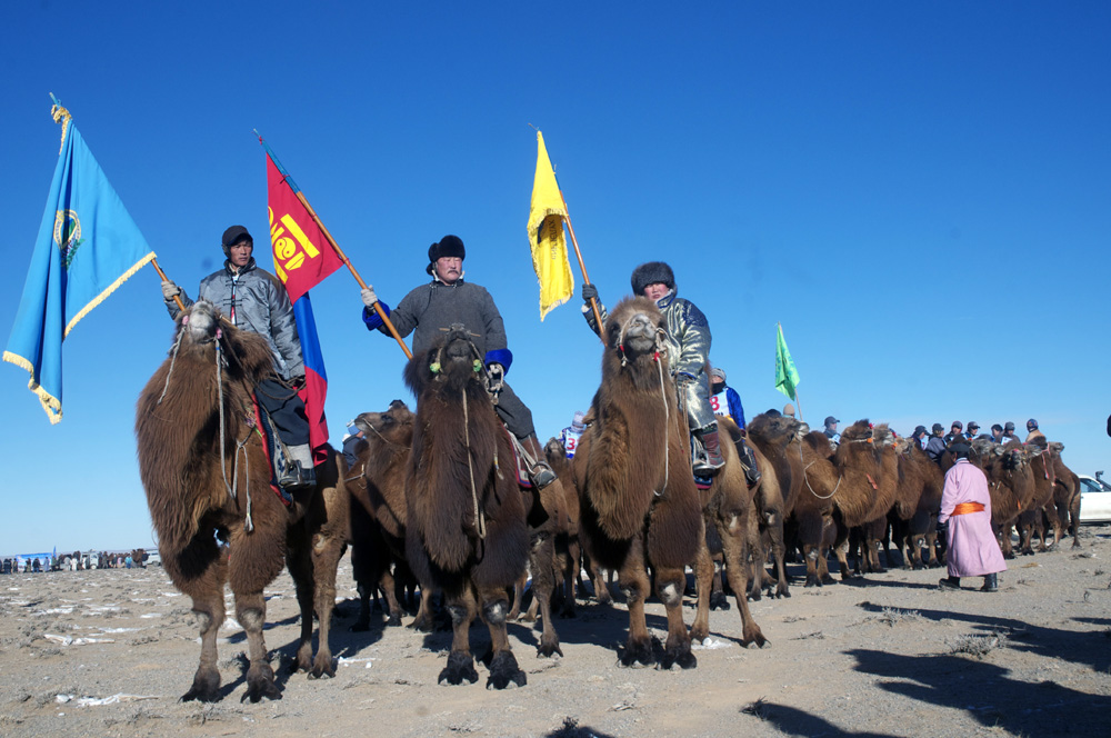 March 6. Camel Festival in Bulgan Sum.